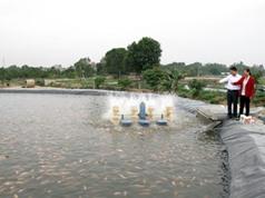 Mô hình nuôi cá độc đáo ở Hòa Phong, Hưng Yên