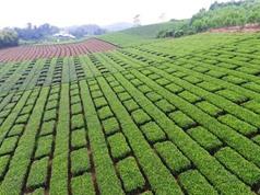Chùm ảnh bức tranh đồng quê Việt Nam rực rỡ sắc màu