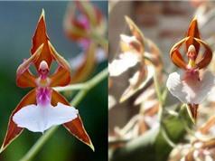 Những bông hoa có hình dạng kỳ quái nhất quả đất