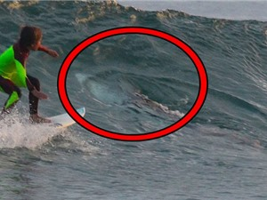 Khoảnh khắc bé 10 tuổi đối mặt với cá mập trắng dài 3m