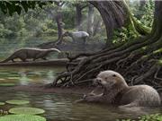 Hóa thạch rái cá hơn 6 triệu năm tuổi to như chó sói