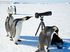 Những khám phá thú vị chỉ có ở Nam Cực