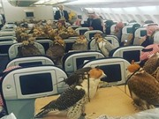 Hoàng tử Saudi mua vé máy bay cho... 80 con chim ưng
