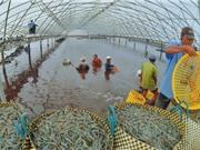 Cà Mau đẩy mạnh phát triển nông nghiệp công nghệ cao
