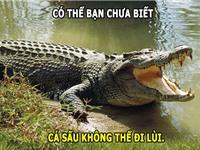 ĐỘC-LẠ: Mực nặng kỷ lục 3.628kg, cá sấu không thể đi lùi