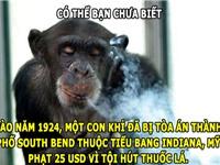ĐỘC-LẠ: Khỉ bị phạt tiền vì... hút thuốc lá