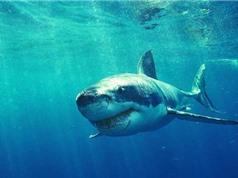 Mexico: 13 con cá mập trong khu giải trí suýt thoát ra ngoài