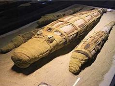 Phát hiện xác ướp cá sấu khổng lồ ở Ai Cập