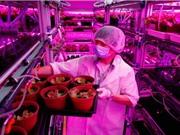 Trang trại trong nhà sản xuất 80 tấn rau sạch mỗi năm