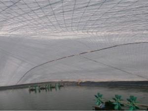 Nuôi tôm trong nhà kính – mô hình làm kinh tế hiệu quả ở Thái Bình