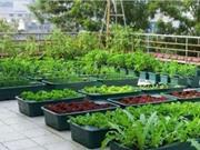 Những lưu ý khi trồng rau trên mái nhà
