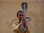 Clip: Khám phá nghề thôi miên rắn ở Ấn Độ