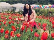 Ngắm vẻ đẹp của vườn hoa tulip ở Lào Cai
