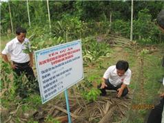 Quảng Ngãi ứng dụng khoa học kỹ thuật trong trồng cây ăn quả