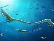 Tìm thấy hóa thạch loài đầu dài gấp đôi cơ thể mang phôi thai