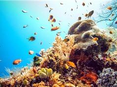 10 hòn đảo san hô đẹp nhất thế giới