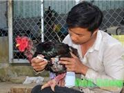 Nông dân Đắk Nông bật mí bí quyết nuôi gà Đông Tảo thu nhập trăm triệu