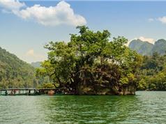 Ngắm vẻ bình yên của hồ nước ngọt lớn nhất Việt Nam