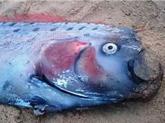 """Người dân Philippines lo lắng khi """"rồng biển"""" liên tục xuất hiện"""