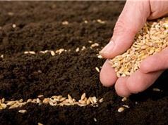 Tìm thấy hạt giống 2.000 năm tuổi trong cổ mộ Trung Quốc