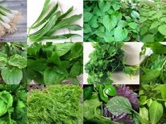 """Cách trồng các loại rau thơm tại gia """"dễ như trở bàn tay"""""""