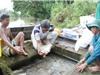 Bí quyết nuôi cá chép giòn thu lãi cả tỷ đồng/năm ở An Giang