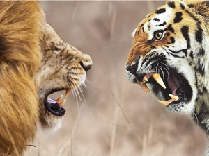 Clip động vật đại chiến