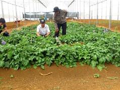 Bình Định: Phát triển cây dược liệu, bảo tồn cây đặc sản