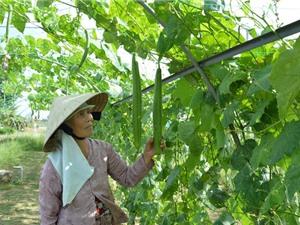 Rau và cây ăn quả thu nhập tăng 4 - 8 lần lúa