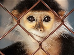 Nửa số loài trên Trái Đất sẽ biến mất trong 100 năm tới