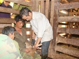 Hương Sơn vào mùa cắt 'lộc' nhung hươu, giá mỗi cặp bằng cả tấn thóc