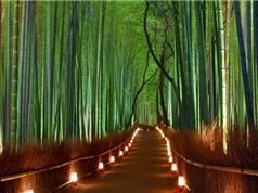 """""""Mục sở thị"""" 10 khu rừng đẹp nhất thế giới"""