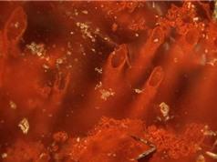 Hóa thạch gần 4 tỷ năm có thể hé lộ nguồn gốc sự sống