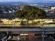 Bí ẩn cây 700 tuổi tại Nhật Bản cứ bị chặt là có người đổ bệnh