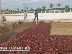 Tăng giá trị càphê Việt nhờ công nghệ enzym