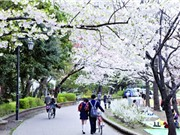 10 điểm ngắm hoa anh đào lý tưởng nhất ở Nhật Bản và Hàn Quốc