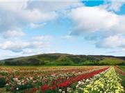 """""""Lạc trôi"""" vào thung lũng hoa hồng ở Bulgaria"""