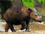 Điểm danh 10 loài vật đã tuyệt chủng ở Việt Nam 2 thập kỷ qua