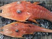 Loài cá giống sinh vật thời tiền sử