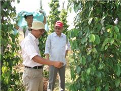 Phát triển và bảo tồn cây, con đặc trưng của Phú Quốc
