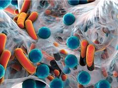 Bệnh Parkinson có liên quan tới vi khuẩn đường ruột