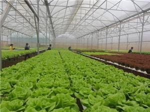 Lâm Đồng: Xây dựng vùng rau, hoa thành thương hiệu số 1 Việt Nam