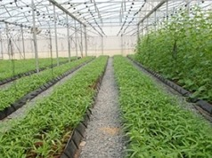Từ nay, làm nông nghiệp công nghệ cao không phải lo về vốn