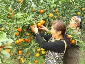 Xây dựng thương hiệu nông sản Hà Nội: Bước đi cụ thể