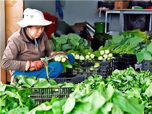 Gia Lai: Nông nghiệp công nghệ cao, hình thành mô hình sản xuất sản phẩm sạch
