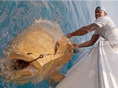Clip: Top 10 tai nạn câu cá hài hước nhất thế giới