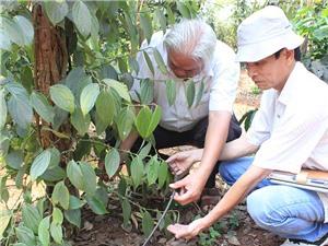 Gia Lai: Hỗ trợ 250 triệu đồng cho mô hình tưới nước nhỏ giọt trên cây hồ tiêu