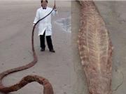 """""""Thủy quái"""" khổng lồ trôi dạt vào bờ biển Nhật Bản"""