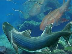 Tìm thấy cá bọc thép 420 triệu tuổi ở Trung Quốc