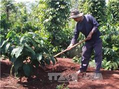 Đắk Lắk: Sẽ quy hoạch lại diện tích trồng để tăng giá trị cà phê Việt Nam